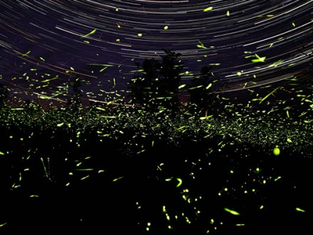 firefly-night-tour-1