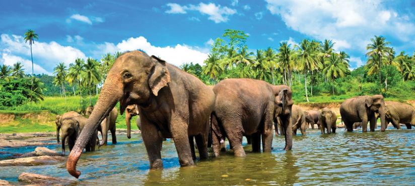YALA National Safari Park Edith001