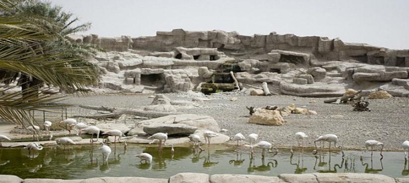 ARABIAN WILDLIFE CENTER - SHARJAH 04